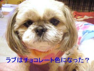 love_20070116_1