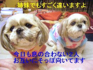 lovemint_20070116_1