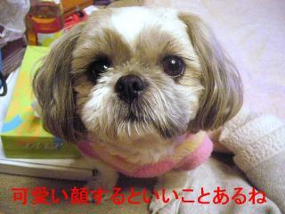 love_20070117_5