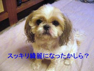 bibi_20070119_1