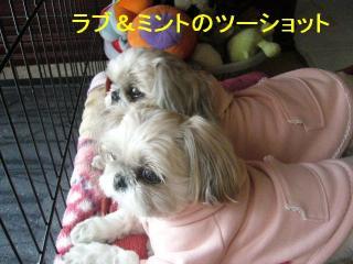lovemint_20070120_1