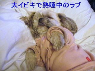 love_20070123_1