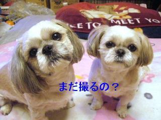 lovemint_20070305_3