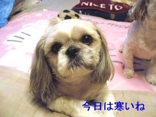 love_20070305_1