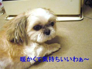 mint_20070316_6