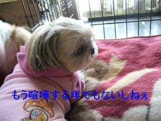 mint_20070318_1