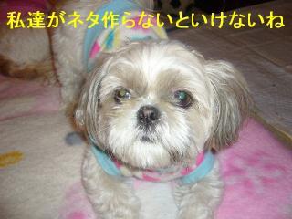 mint_20070411_1