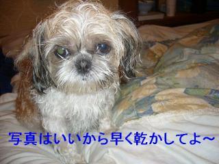 mint_20070413_1