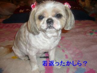 bibi_20070416_1
