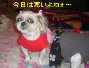 mint_20070418_2
