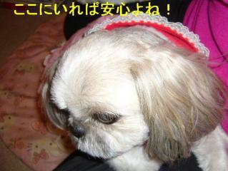 love_20070424_2