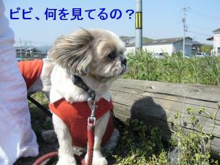 bibi_20070429_1