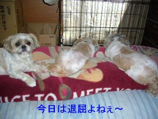 oyako_20070506_1