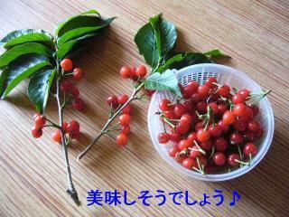 sakura_20070512_12