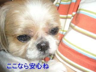 bibi_20070607_2