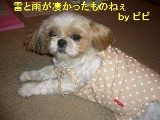 bibi_20070702_1