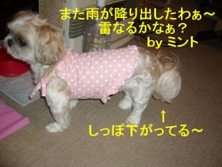 mint_20070702_3
