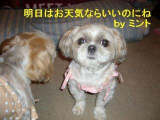 mint_20070702_4