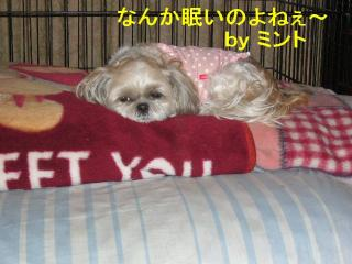 mint_20070705_1