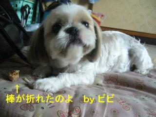 bibi_20070707_2