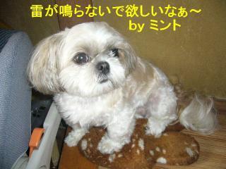 mint_20070714_2