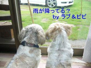 lovebibi_20070714_1