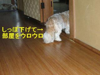 mint_20070715_3