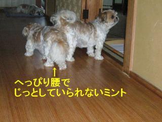 mint_20070715_4
