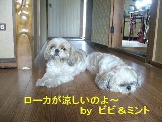 bibimint_20070722_1