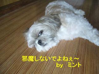 mint_20070722_1