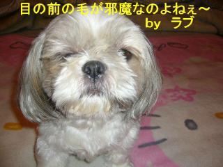 love_20070725_1