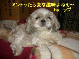 love_20070726_1