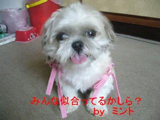 mint_20070729_2