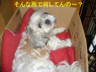 love_20070730_1