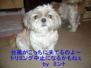 mint_20070801_1