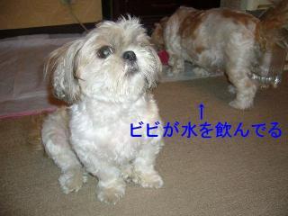 mint_20070801_2