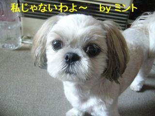 mint_20070816_1