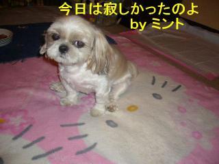 mint_20070818_1