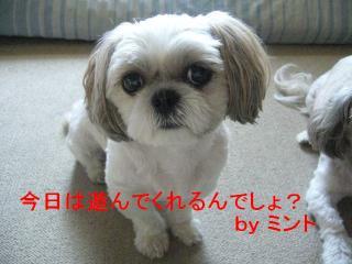 mint_20070819_1