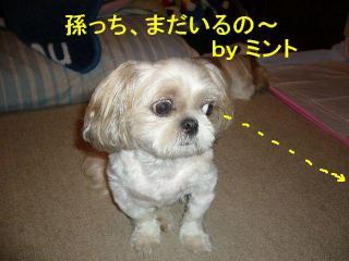 mint_20070821_5