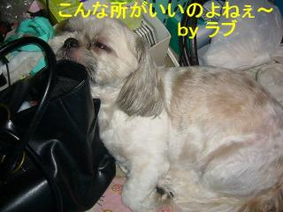 love_20070821_2