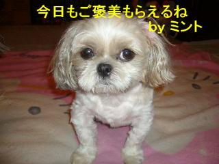 mint_20070824_1
