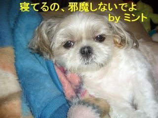 mint_20070827_1