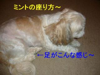 mint_20070904_1
