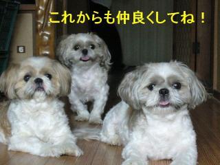 oyako_20071113_1