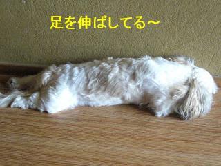 mint__20070909_3