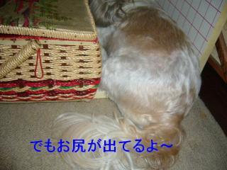 love_20070910_4