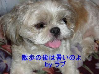 love_20070911_11