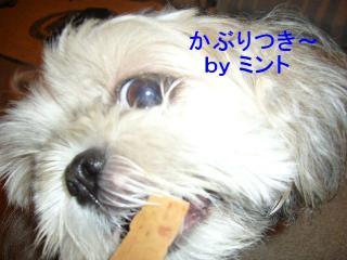 mint_20070912_2