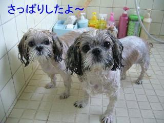 lovemint_20070915_1